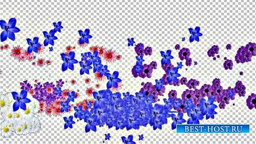 Футажи эффекты - Взрыв цветов