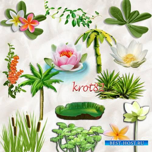 Морской, летний клипарт на прозрачном фоне – Кувшинки, лотос, пальмы, растения, цветы