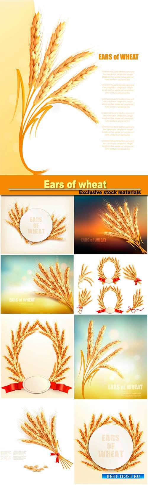 Ears of wheat, vector illustration
