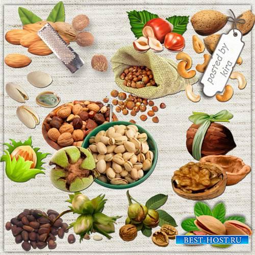 Клипарт к ореховому спасу - Разные орехи