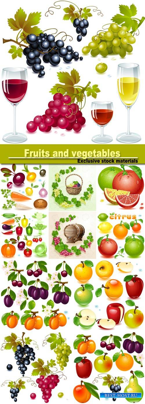 Fruits and vegetables, berries vector