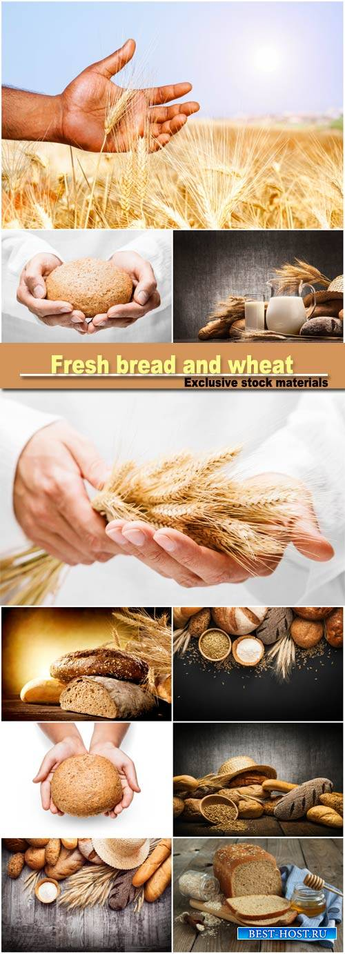 Fresh bread and wheat, ears of wheat in man hands
