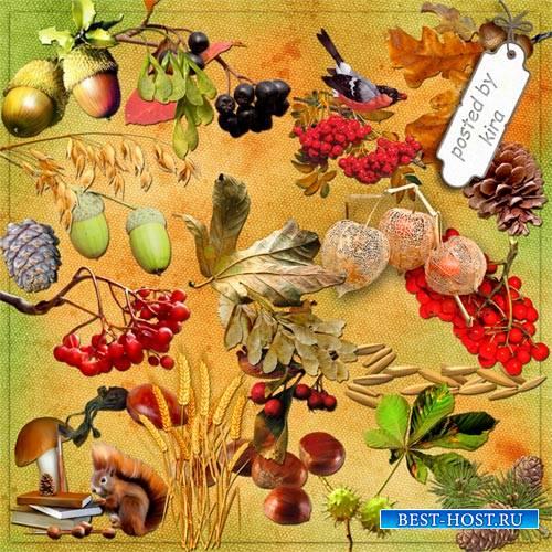 Клипарт - Осенние плоды и семена, часть 2