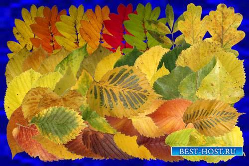 Клипарт Осенний листопад (Рябина, осина, берёза и другие)