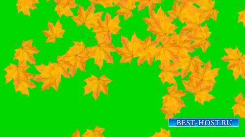 Футаж на хромакее с падающими осенними листьями