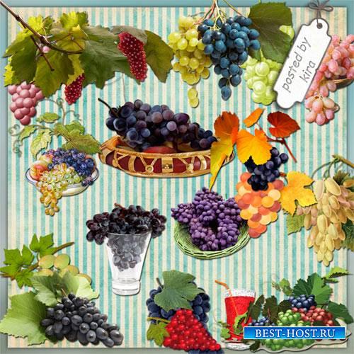 Клипарт - Виноград