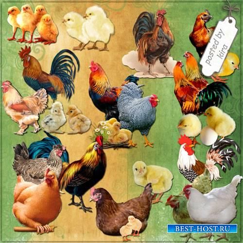 Клипарт - Куриное семейство