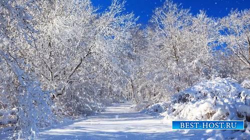 Видео футаж - Дорога в зимнем лесу