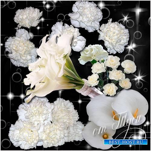 Клипарт - Белые цветы / Clipart - White flowers