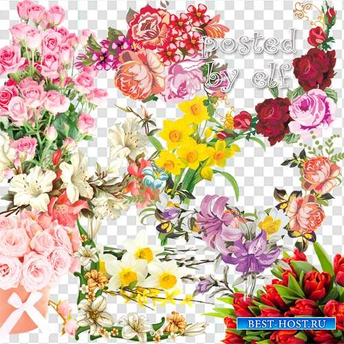 Тюльпаны, лилии, розы, нарциссы на прозрачном фоне