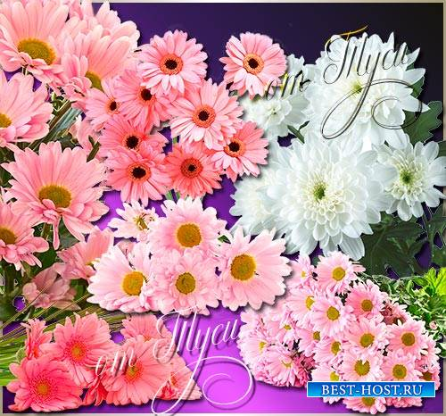Clip Art - Chrysanthemum - Queen of autumn flowers