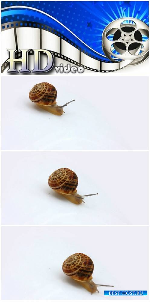 Video footage snail moving on white