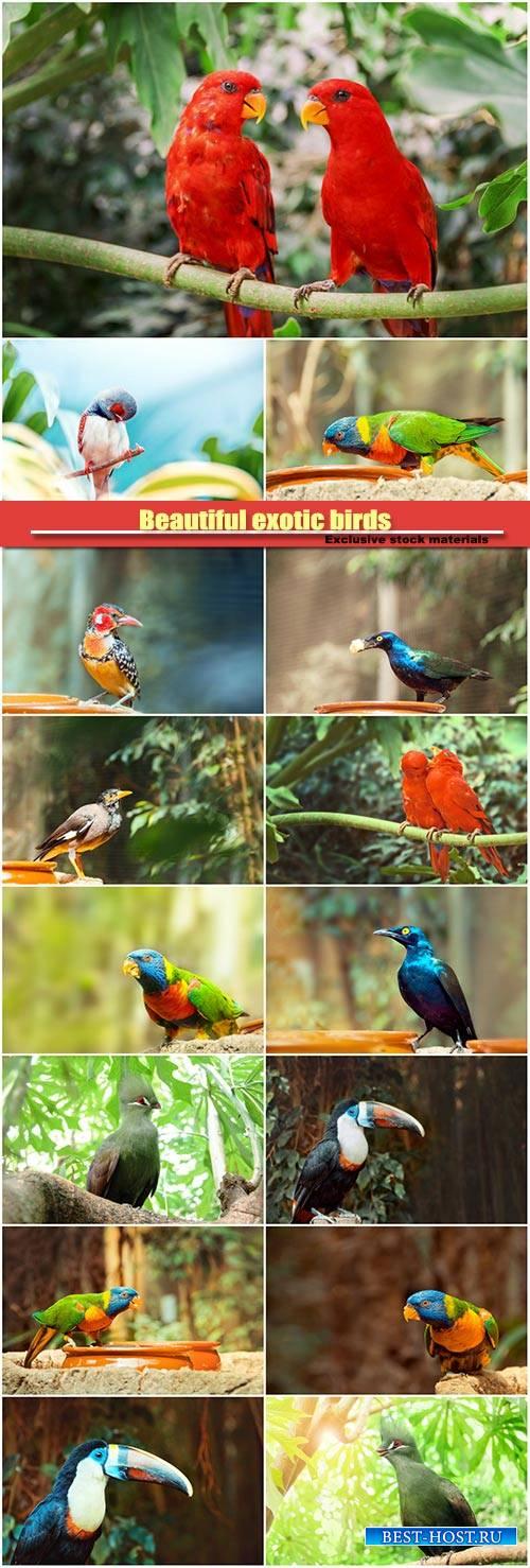 Beautiful exotic birds