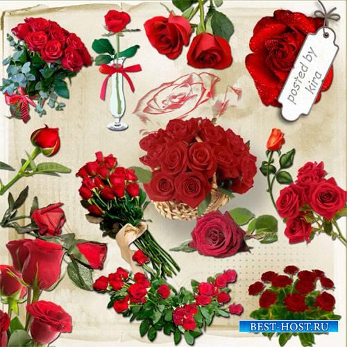 Клипарт - Красные розы в png