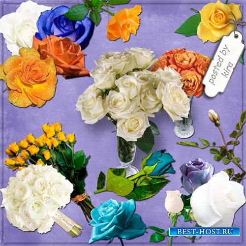 Клипарт - Разноцветные розы, кроме красных и розовых