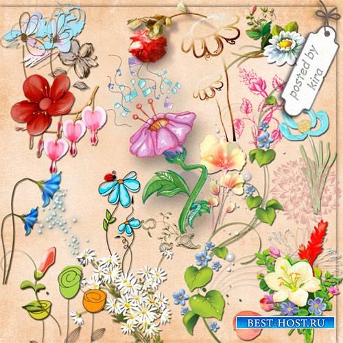 Клипарт - Цветы рисованные