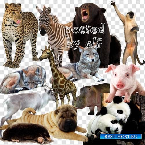 Животные на прозрачном фоне
