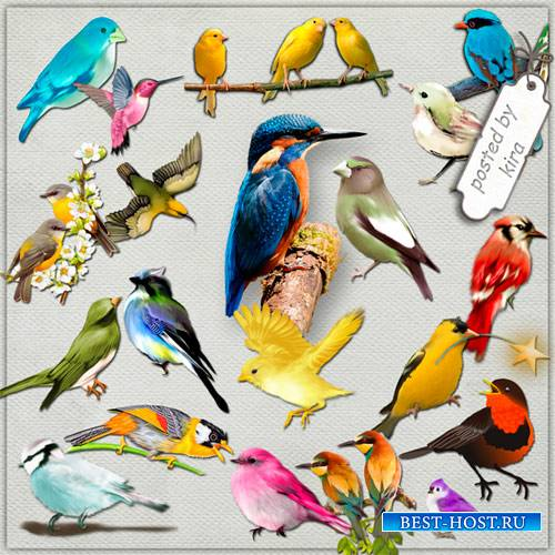 Клипарт - Маленькие пташки на прозрачном фоне