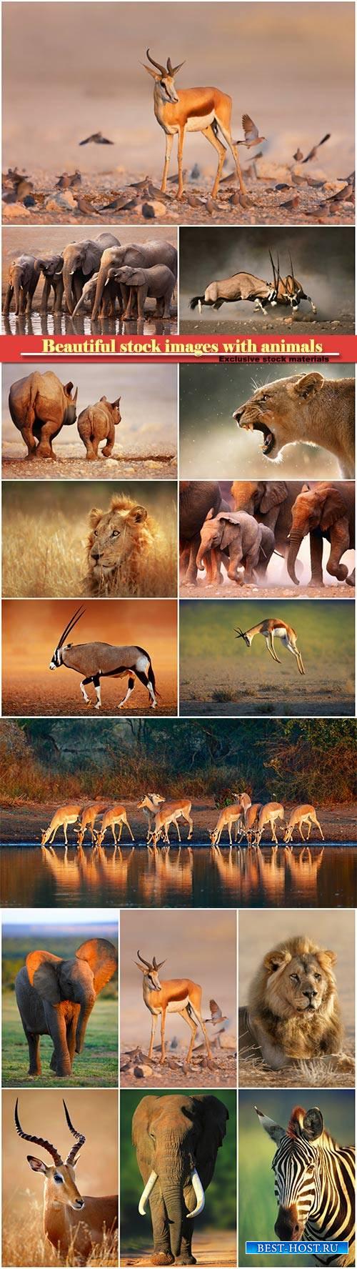 Beautiful stock images with animals, elephants, lion, zebra