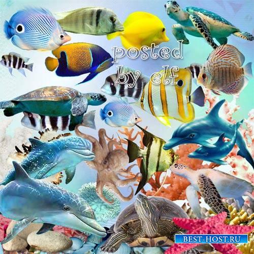 Морской клипарт png - Дельфины, рыбки, кораллы, ракушки, водоросли