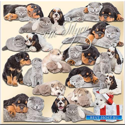 Клипарт - Нежная дружба щенков и котят