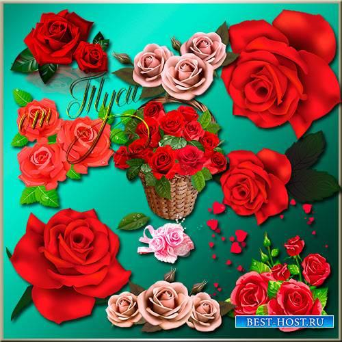 Роза распустила нежный лепесток - Клипарт