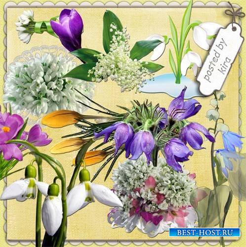 Клипарт на прозрачном фоне - Первые весенние цветы: ландыши, крокусы, подсн ...