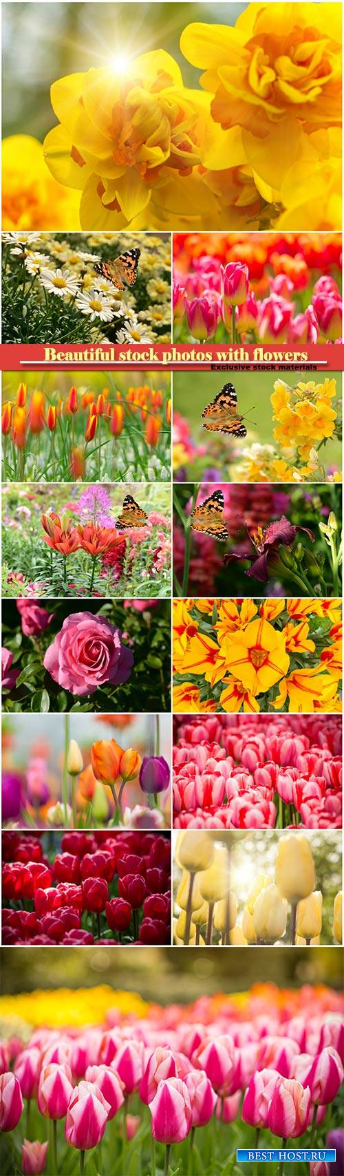 Beautiful stock photos with flowers, tulips, roses, daffodils, chamomiles