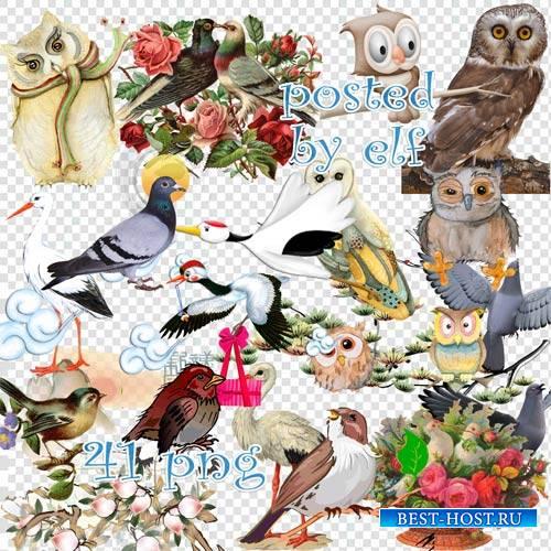 Совы, воробьи, голуби, аисты - клипарт без фона