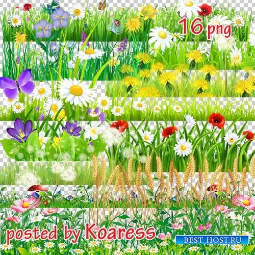 Png клипарт на прозрачном фоне - Цветочный луг, поляны (часть 2)