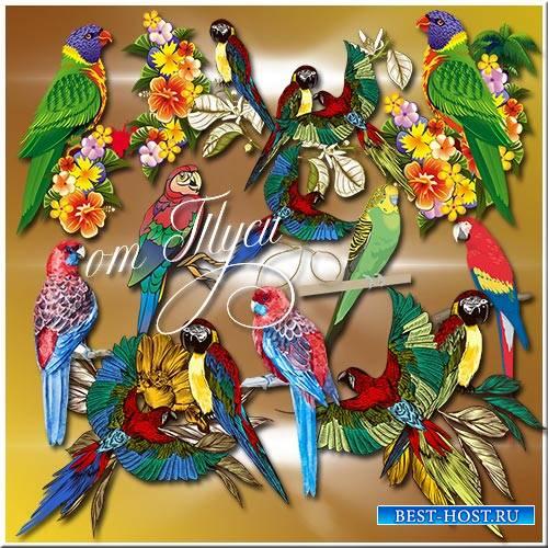 Клипарт - Попугаи