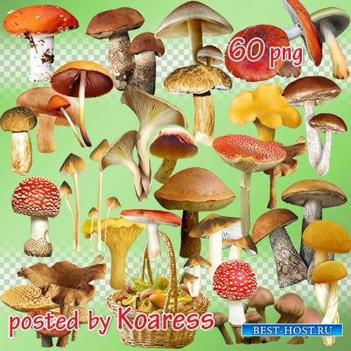 Png клипарт для дизайна - Грибы и корзины с грибами