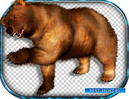 Картинки png - Медведи