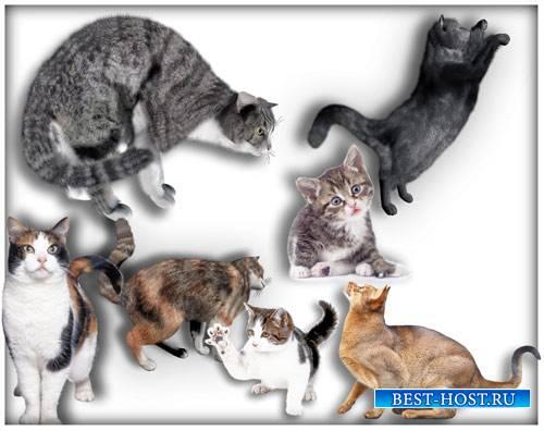 Картинки в формате png - Коты и кошки