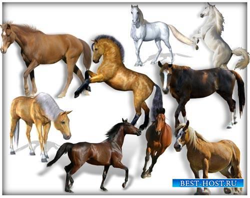 Png на прозрачном фоне - Лошади