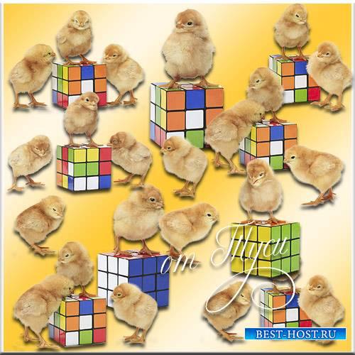 Цыплята и кубик-рубик - Клипарт