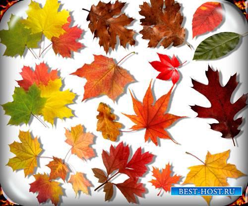 Картинки на прозрачном фоне - Осенние листья
