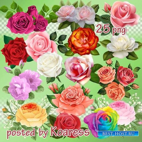 Png клипарт для Фотошопа - розы и композиции с розами
