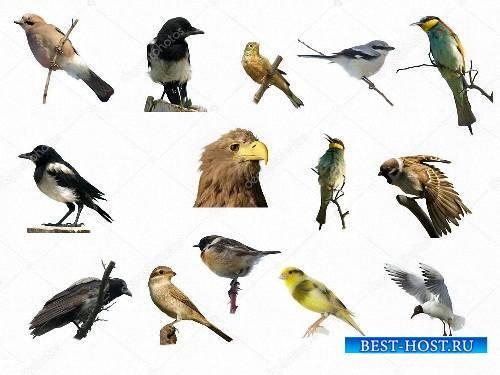 Картинки на прозрачном фоне -  Разнообразные птицы