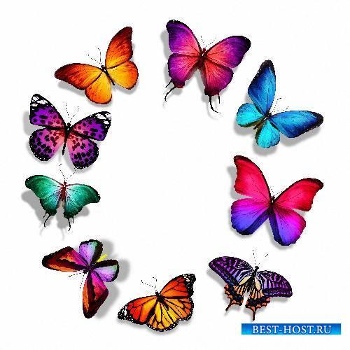 Красивые Png - Цветные бабочки