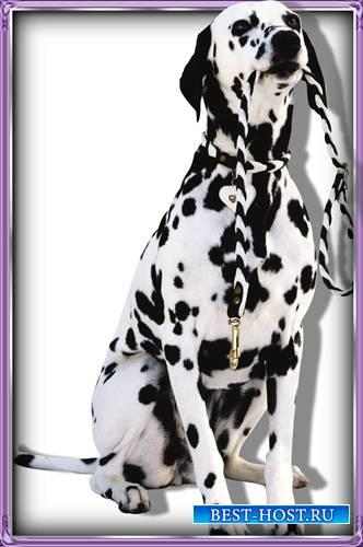 Картинки в формате png - Породистые собаки