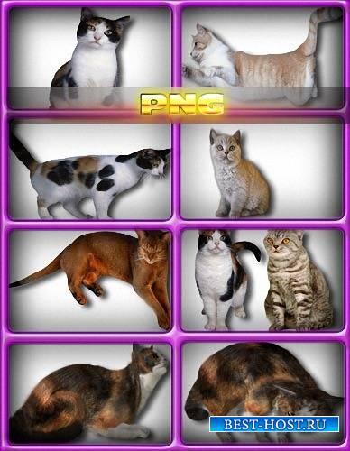 Прозрачный png - Коты и кошки