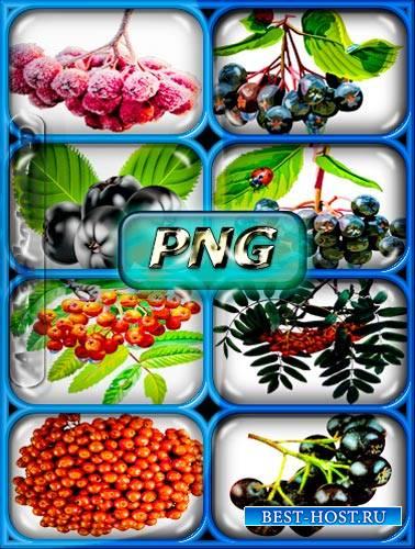 Клипарты Png - Черная и красная рябина