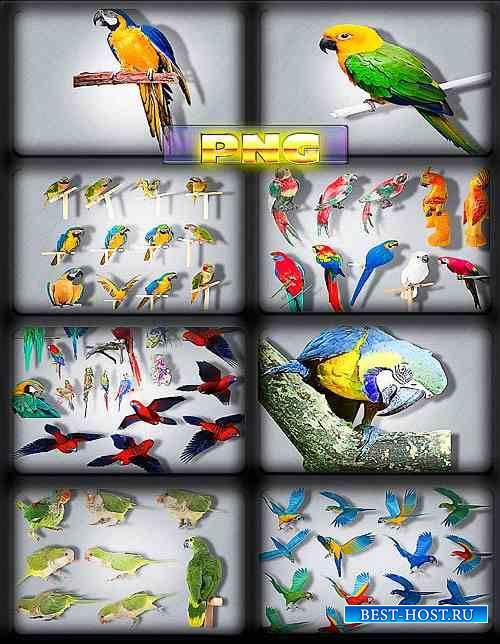 Клипарты на прозрачном фоне - Разноцветные попугаи