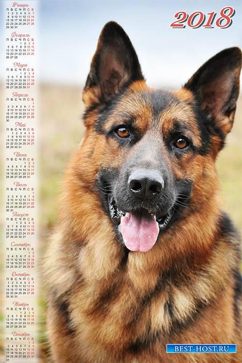 Календарь на 2018 год - Немецкая овчарка