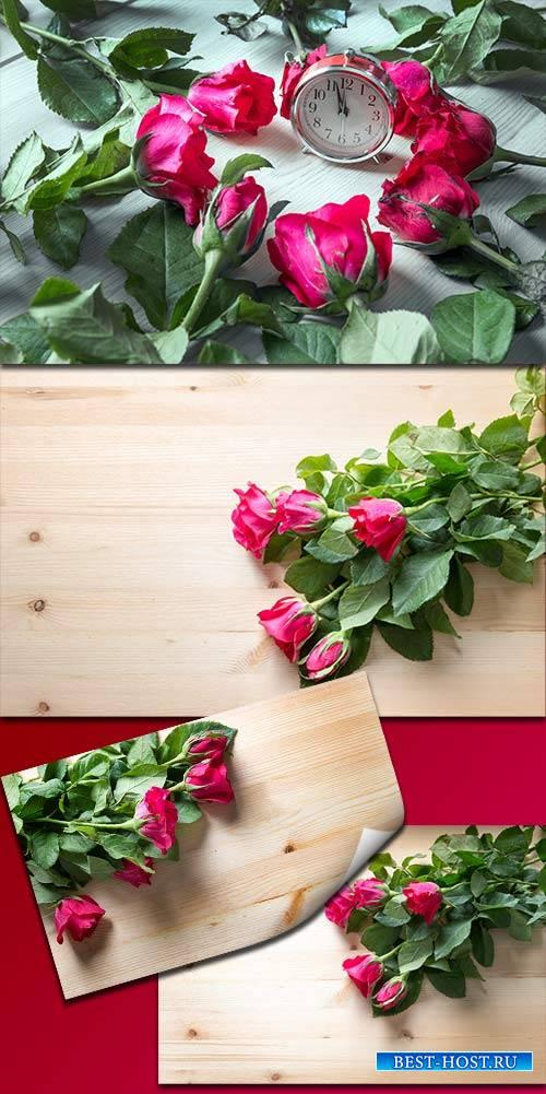 Прекрасные розы для поздравлений - Клипарт / Beautiful roses for congratula ...