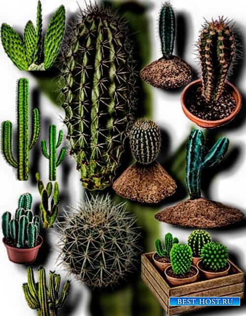 Растровые клип-арты - Колючие кактусы