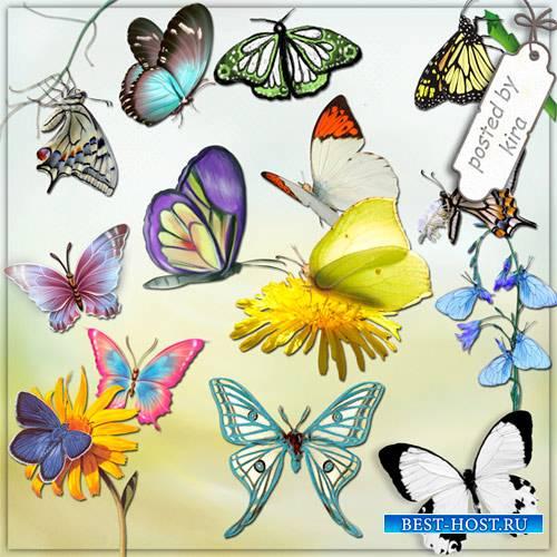 Клипарт - Бабочки на прозрачном фоне