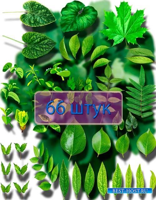 Png на прозрачном фоне - Листья деревьев и кустов