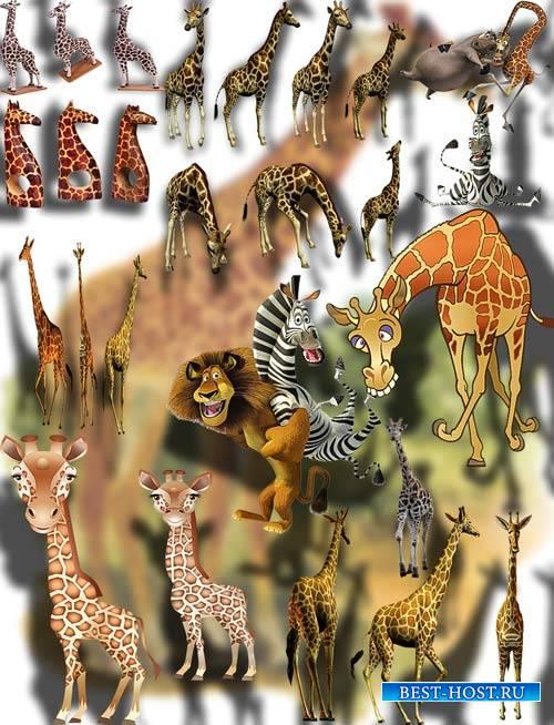 Клипарты png без фона - Веселые жирафы